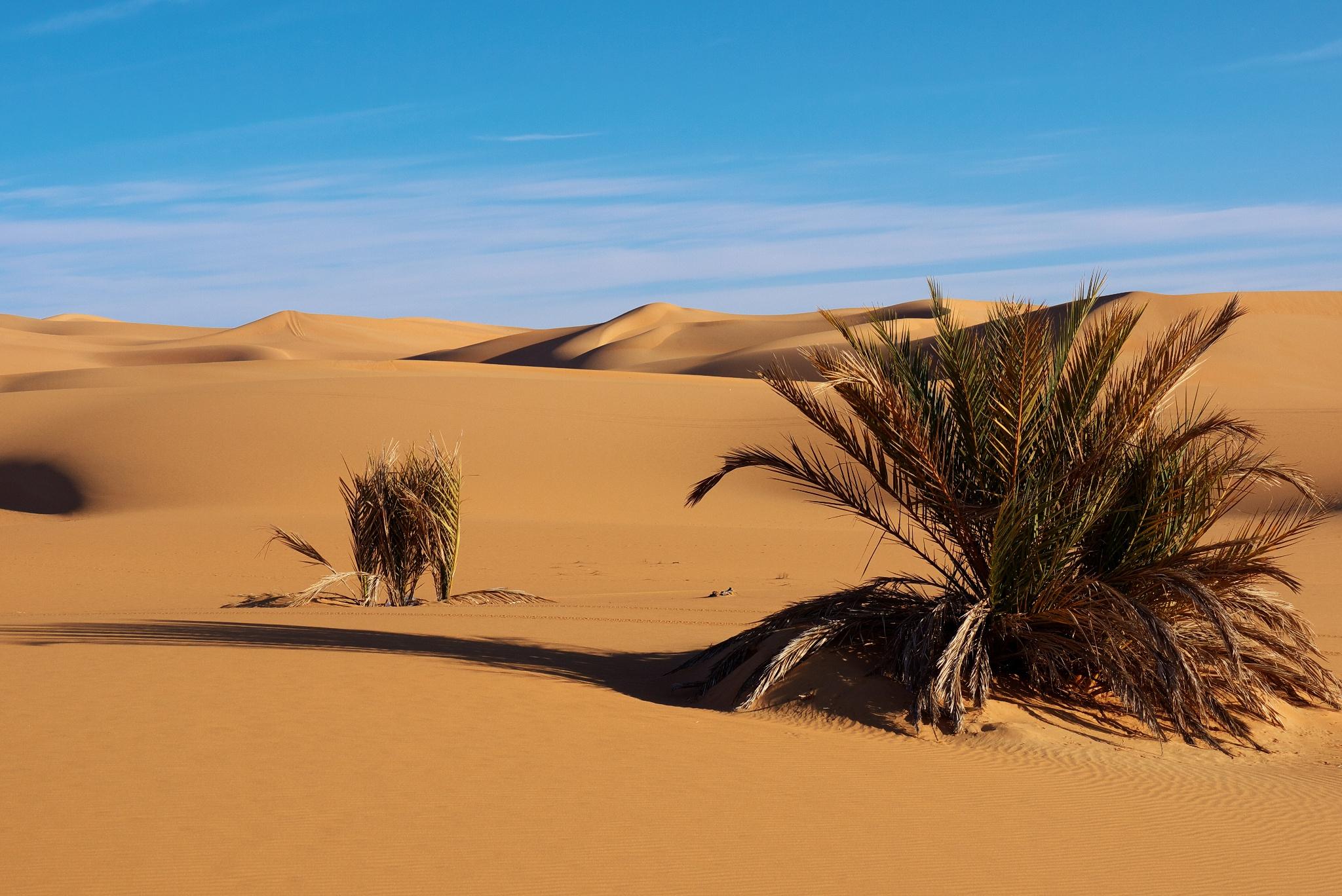 Рослини в пустелі фото 6 фотография