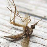 Как защититься от кровососущих насекомых